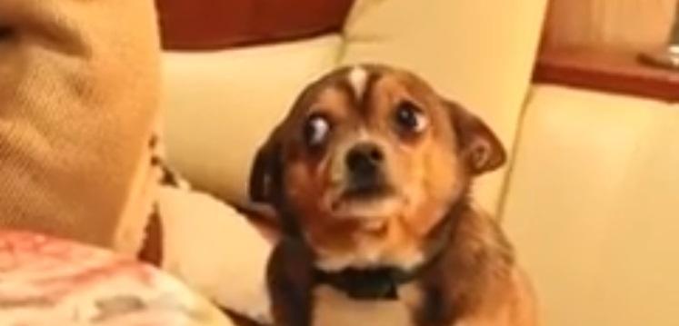 86a36404deedfd953558c66912c2cf2d - Mira la cara que pone este perrito cuando lo regañan