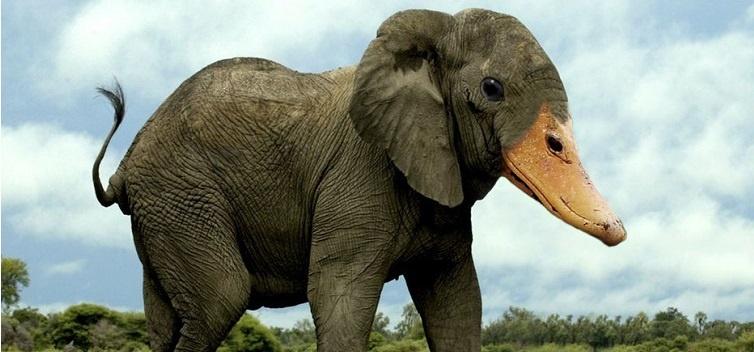9e2860452c1d2b0e6a12880faacca72d - Photoshop animal