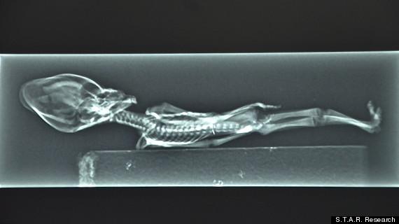 Documental revela en imágenes a alienígena descubierto en Chile (Fotos y Video) 3