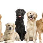 5 cosas que no sabías sobre los perros 9