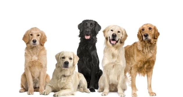 bac23c5d88798b672b2bde7136b7b34a - 5 cosas que no sabías sobre los perros