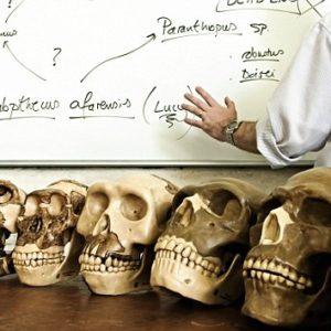 Los antepasados humanos más tempranos fueron simios acuáticos 10