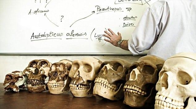Los antepasados humanos más tempranos fueron simios acuáticos 11