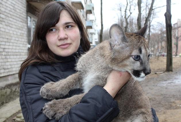 Chica lituana comparte apartamento con tres pumas 14