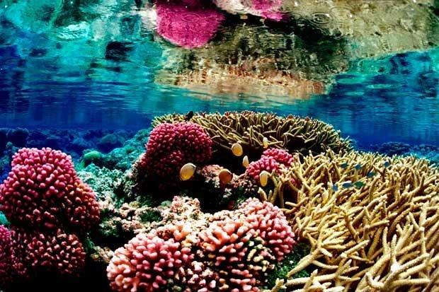 f0e832f2aa0cf1edd0fde90ad354cf32 - Equipo de detección de cáncer muestra por qué algunos corales resisten al blanqueo