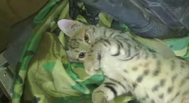 Un soldado salva a un gato en Afganistán y el animal le devuelve el favor 26