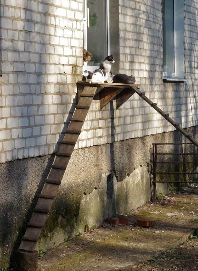 El puente de los gatitos 23