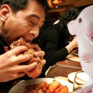 Rata por ternera: Desmantelan una red de falsificadores de carne en China 26