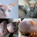 10 animales que te van a provocar pesadillas 7