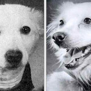 Salvación en Siberia: revelan la increíble historia de 2 perras cosmonautas de la URSS 23