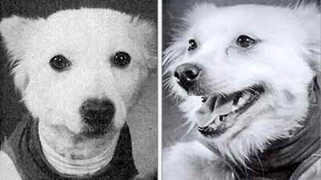 3adece6c1864c4fce72e5afe78a273ae - Salvación en Siberia: revelan la increíble historia de 2 perras cosmonautas de la URSS