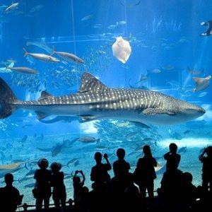 El 2º acuario más grande del mundo 27