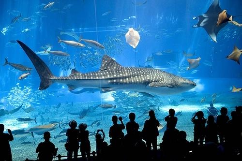 57a563bcafe5adb5a476933fe298e364 - El 2º acuario más grande del mundo