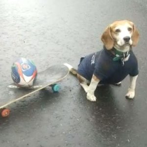 #Video Murphy, el perro experto en hacer Skateboarding 38