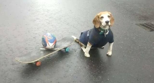 5ee62de325278a8cb59a4d93e83a58af - #Video Murphy, el perro experto en hacer Skateboarding