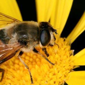 Europa prohíbe tres pesticidas que matan a las abejas 24