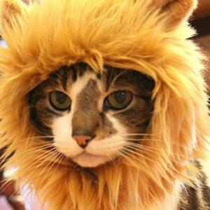 Gorro de león para gatos 5