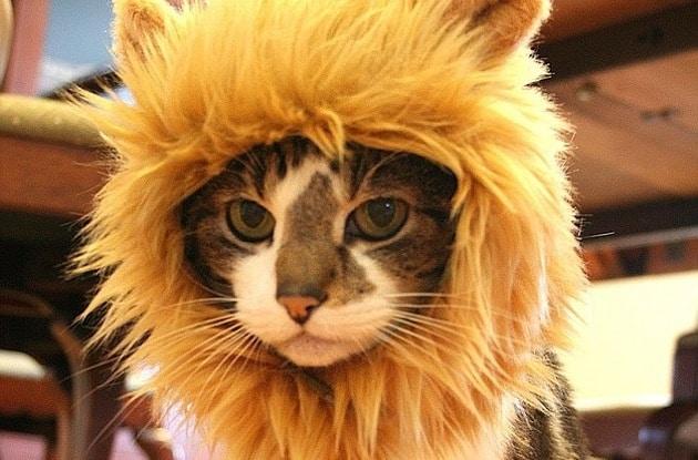 Gorro de león para gatos 11