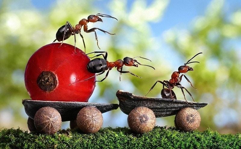 a04f69b807a030fefba14f6d9105a7f8 - Fotógrafo ruso crea un mundo de cuento de hadas con hormigas