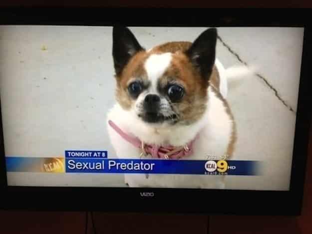 33 Perros ? totalmente descontrolados ? 22