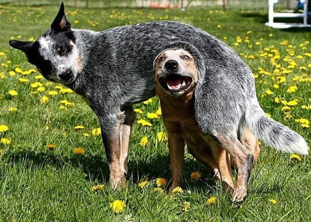 33 Perros ? totalmente descontrolados ? 25