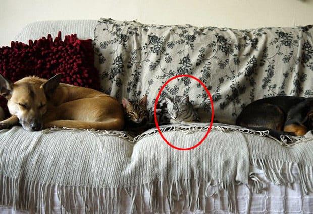 noticiascuriosas Gatos maestros del camuflaje