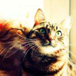 8 destinos perfectos para cualquier amante de los gatos 9