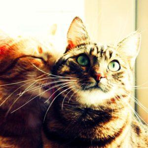 8 destinos perfectos para cualquier amante de los gatos 30