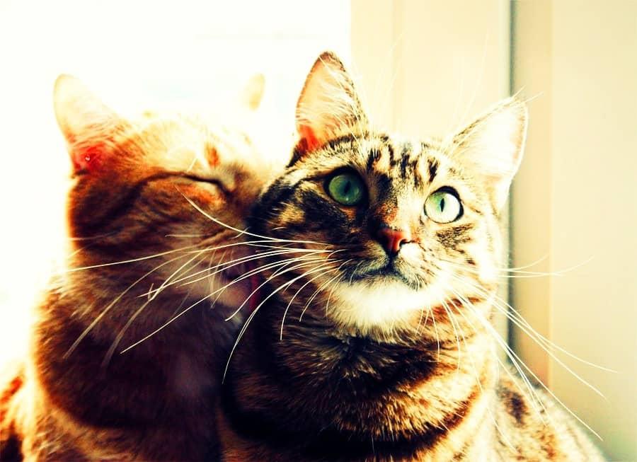 8 destinos perfectos para cualquier amante de los gatos 1