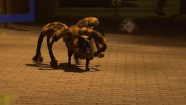 #Video Perro Araña Mutante y Gigante aterroriza Polonia 2