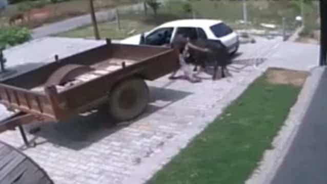 db1fdc6240f18ab5817662ddd58aeedd - #Video Ladrones pillados robando una vaca. La meten en la parte trasera del coche