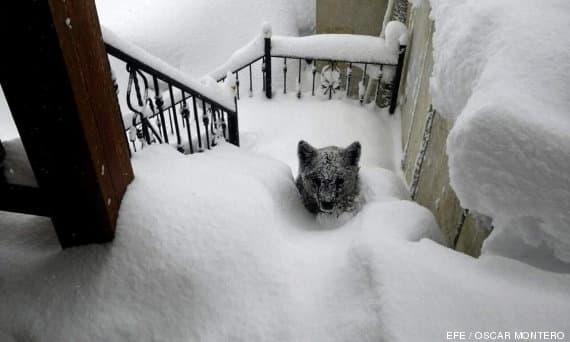 8315f5644cc10256d6fd2f5c0dbe37ec - Se encuentra un Osesno en las escaleras de su casa, tras el temporal de nieve