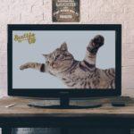 SentidoTv tu nueva Tv Online 10
