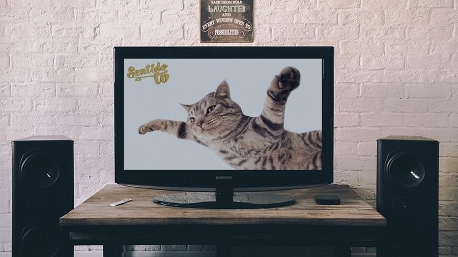 SentidoTv tu nueva Tv Online 11