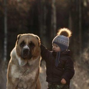 El 50% de los niños reconoce haber pedido una mascota por Navidad 26