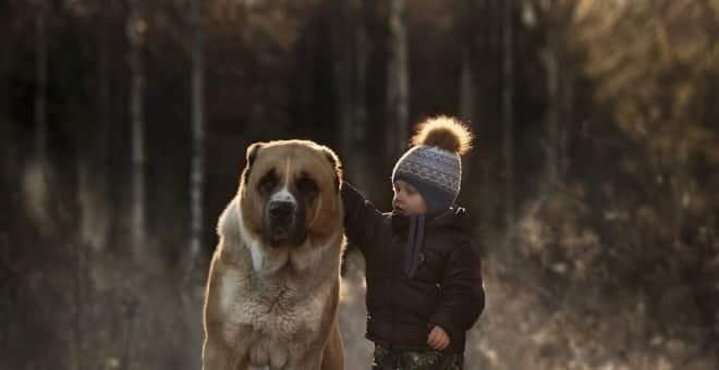 f88246c1fba52a8402b8b426b2b156ab - El 50% de los niños reconoce haber pedido una mascota por Navidad