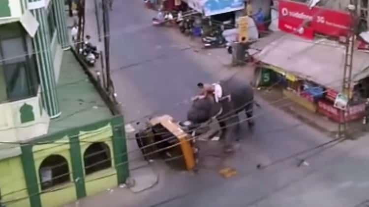 #Video Un elefante enfadado siembra el pánico en la India 173