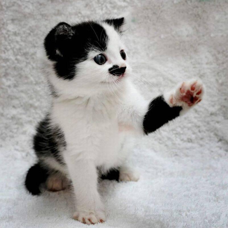 No adoptaban a un gato por su parecido con Hitler