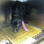Un desconocido rescata y salva la vida de un perro que se había perdido 6
