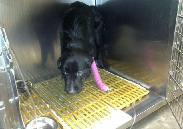 29efb20beb7a049e643e1b989a9fbd24 - Un desconocido rescata y salva la vida de un perro que se había perdido
