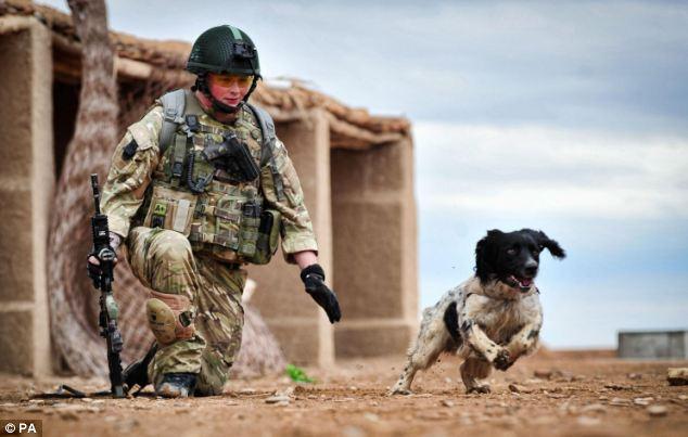Theo, un perro detector de bombas, muere de un ataque al corazón tras el fallecimiento de su guía