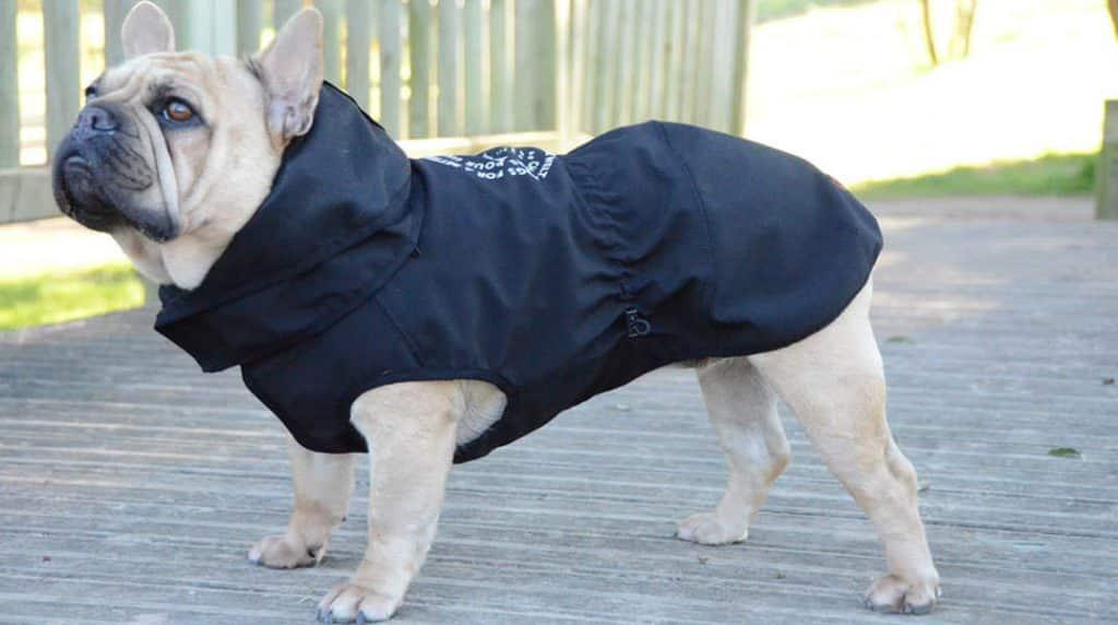 Cómo saber qué talla de chubasquero necesita tu perro 134