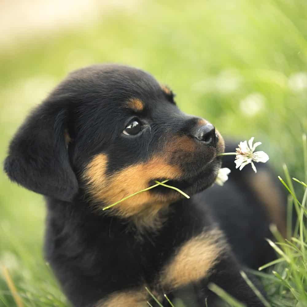 Estafa en una venta de perros por internet 108