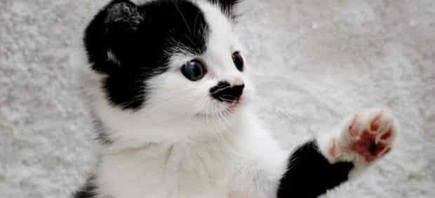 No adoptaban a un gato por su parecido con Hitler 29