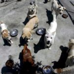Campaña para evitar abandonos de perros 6