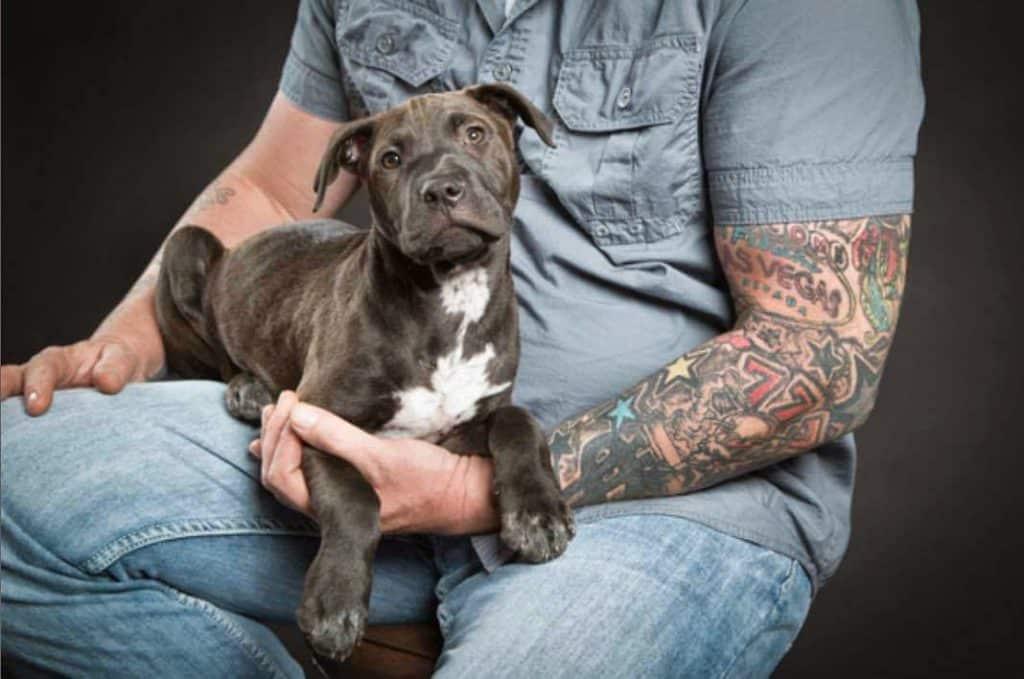 Un perro encontró objetos robados en una bodega 120