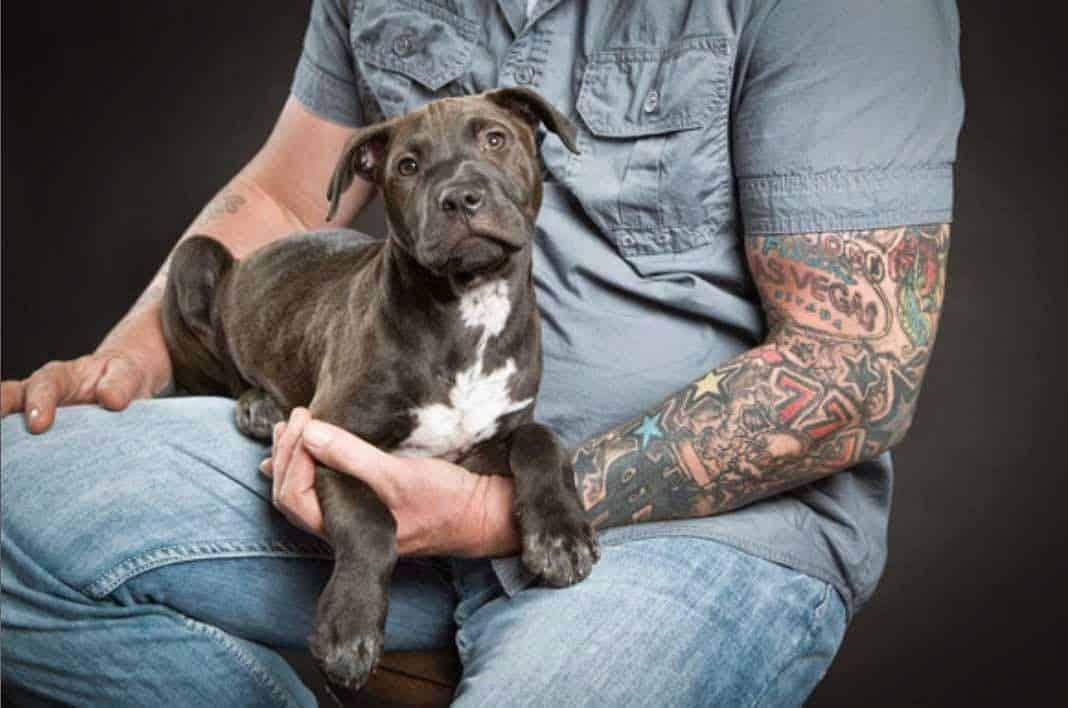 Un perro encontró objetos robados en una bodega 12