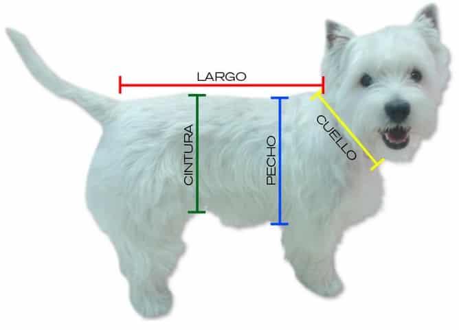como se la talla de ropa de mi perro