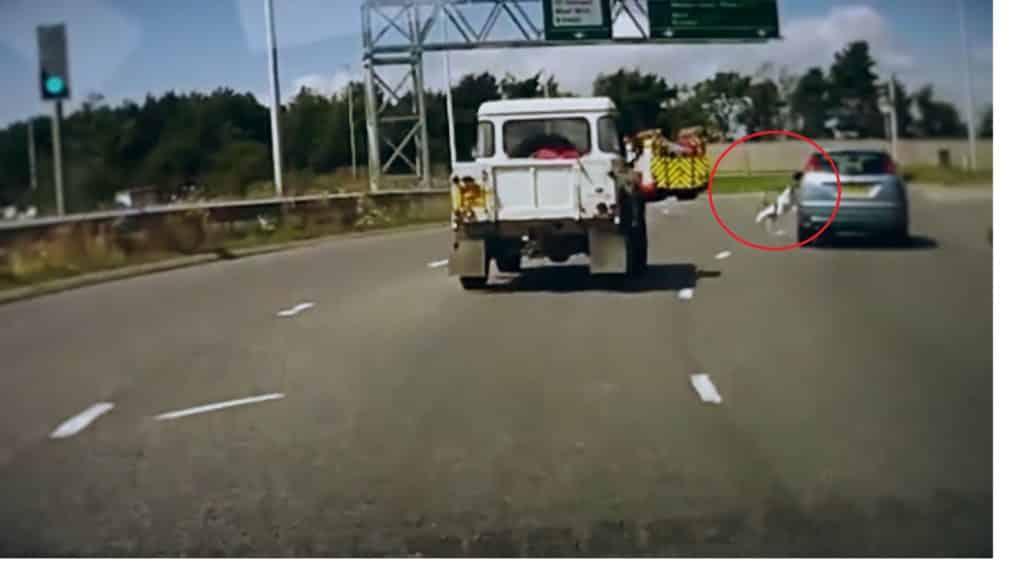 #Video Perro cae de un coche en marcha en una autopista de Reino Unido 2