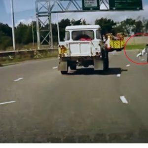 #Video Perro cae de un coche en marcha en una autopista de Reino Unido 8